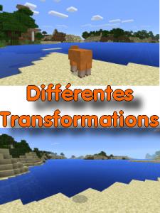 Différentes transformations